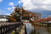 Tree hanging over the Ninomaru moat - Odawara Castle