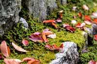 Autumn leves among moss covered stones