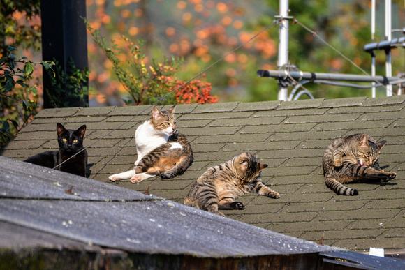 Cat House?