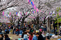 Hanami (Flower viewing)